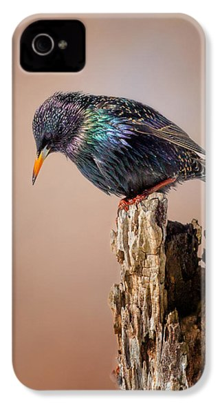 Backyard Birds European Starling IPhone 4 / 4s Case by Bill Wakeley