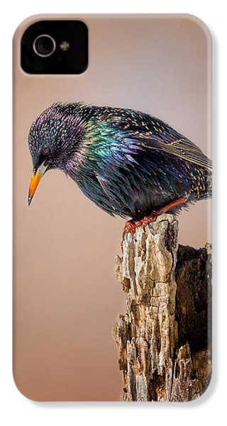 Backyard Birds European Starling IPhone 4 Case by Bill Wakeley