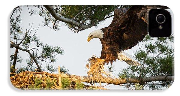 Bald Eagle Building Nest IPhone 4 Case