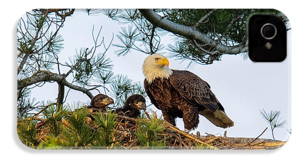 Bald Eagle With Eaglets  IPhone 4 Case