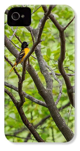 Baltimore Oriole IPhone 4 / 4s Case by Bill Wakeley
