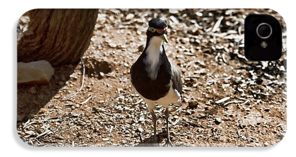 Banded Lapwing IPhone 4 / 4s Case by Douglas Barnard