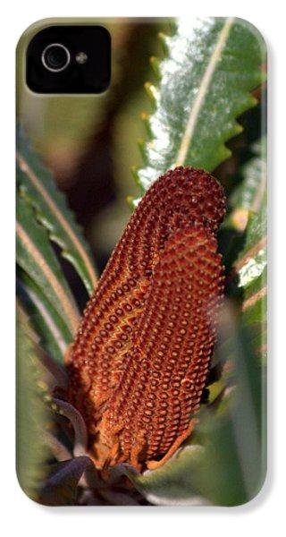 IPhone 4 Case featuring the photograph Banksia by Miroslava Jurcik