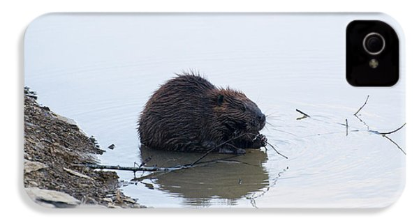 Beaver In The Shallows IPhone 4 Case by Chris Flees