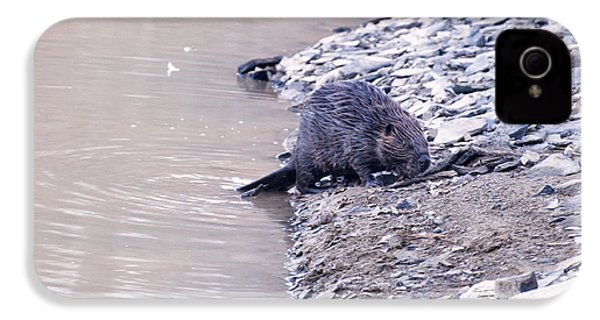 Beaver On Dry Land IPhone 4 Case by Chris Flees