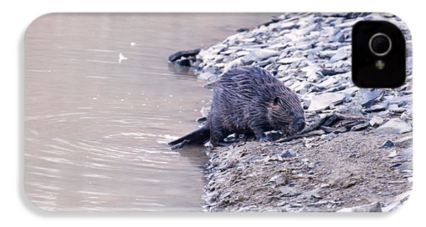 Beaver On Dry Land IPhone 4 / 4s Case by Chris Flees