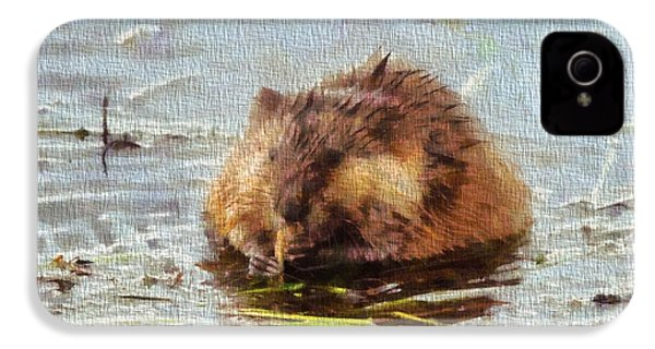 Beaver Portrait On Canvas IPhone 4 Case by Dan Sproul