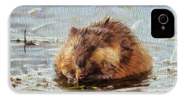 Beaver Portrait On Canvas IPhone 4 / 4s Case by Dan Sproul