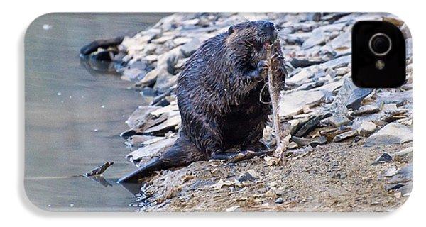 Beaver Sharpens Stick IPhone 4 Case by Chris Flees
