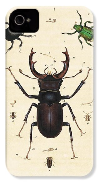 Beetles IPhone 4 Case by King's College London