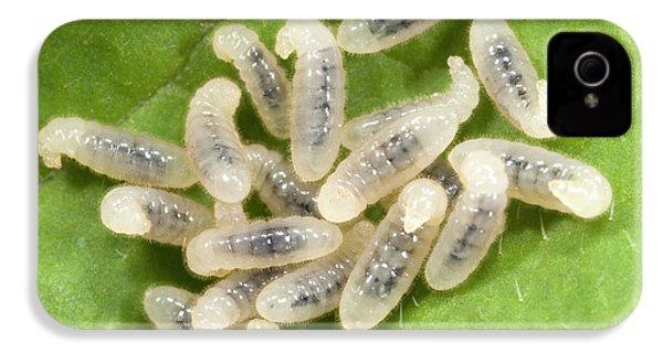 Black Garden Ant Larvae IPhone 4 Case by Nigel Downer