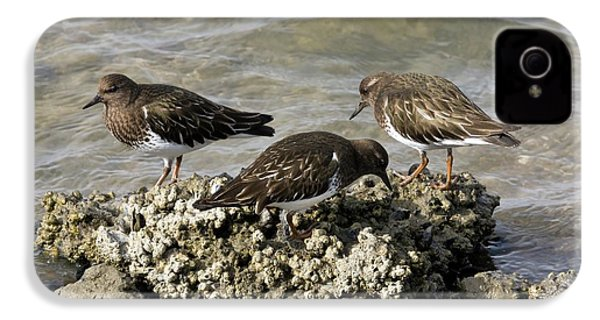 Black Turnstones Feeding IPhone 4 Case by Bob Gibbons