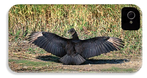 Black Vulture IPhone 4 Case by Paul J. Fusco