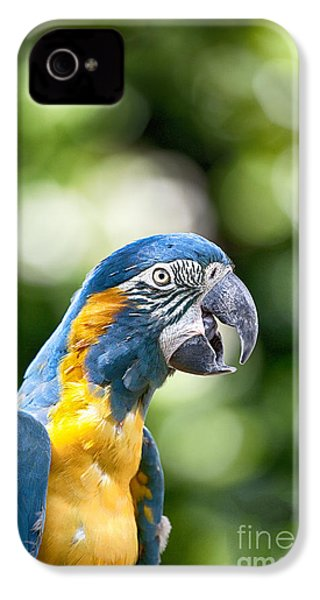 Blue And Gold Macaw V2 IPhone 4 / 4s Case by Douglas Barnard
