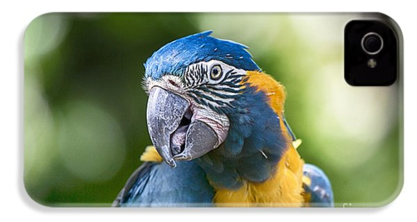 Blue And Gold Macaw V3 IPhone 4 Case by Douglas Barnard