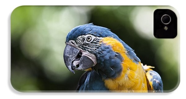 Blue And Gold Macaw V5 IPhone 4 Case by Douglas Barnard