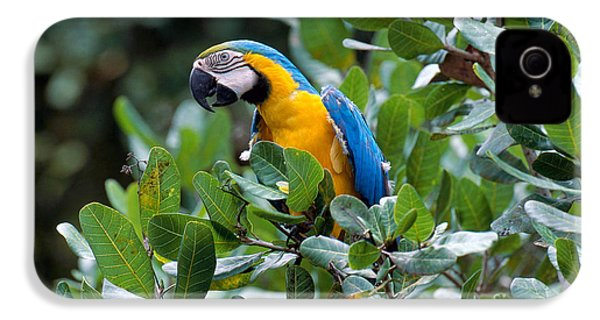 Blue And Yellow Macaw IPhone 4 Case by Art Wolfe
