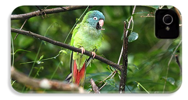 Blue Crowned Parakeet IPhone 4 / 4s Case by James Brunker