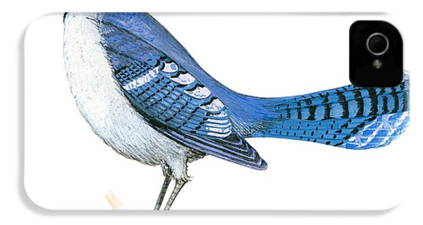 Blue Jay  IPhone 4 / 4s Case by Anonymous