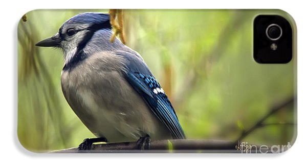 Blue Jay On A Misty Spring Day IPhone 4 / 4s Case by Lois Bryan