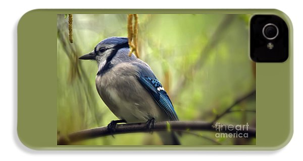 Blue Jay On A Misty Spring Day IPhone 4 Case by Lois Bryan