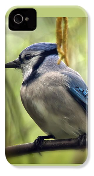 Blue Jay On A Misty Spring Day - Square Format IPhone 4 Case by Lois Bryan