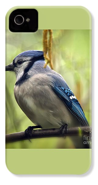 Blue Jay On A Misty Spring Day - Square Format IPhone 4 / 4s Case by Lois Bryan