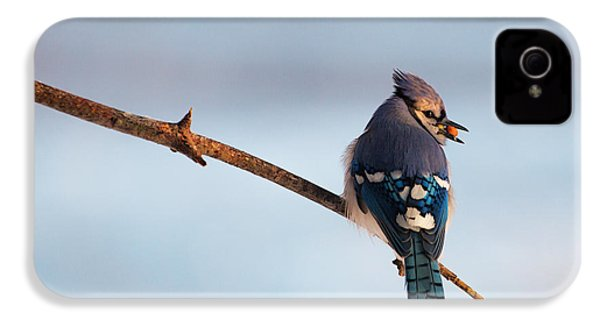 Blue Jay With Nuts IPhone 4 Case by Everet Regal