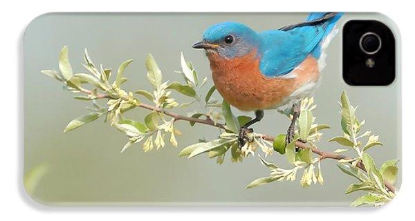 Bluebird Floral IPhone 4 Case