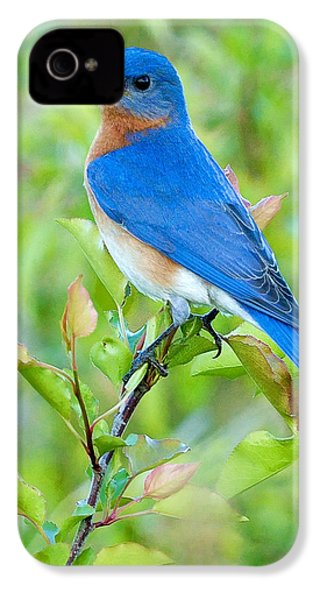 Bluebird Joy IPhone 4 Case