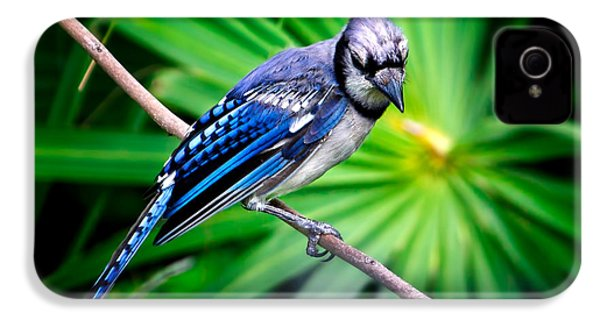 Thoughtful Bluejay IPhone 4 Case