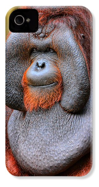 Bornean Orangutan Iv IPhone 4 / 4s Case by Lourry Legarde