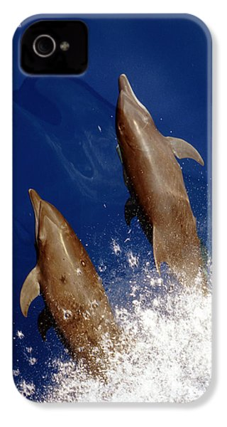 Bottlenose Dolphins Tursiops Truncatus IPhone 4 / 4s Case by Anonymous