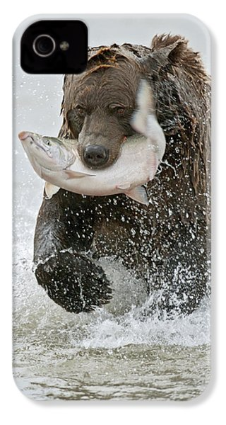 Brown Bear With Salmon Catch IPhone 4 Case