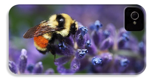 Bumblebee On Lavender IPhone 4 Case
