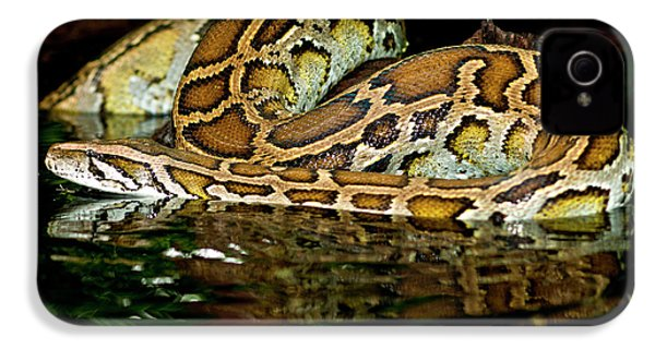 Burmese Python, Python Molurus IPhone 4 / 4s Case by David Northcott