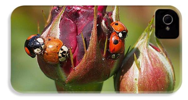 Busy Ladybugs IPhone 4 Case