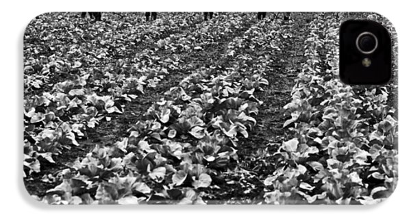 IPhone 4 Case featuring the photograph Cabbage Farming by Ricky L Jones