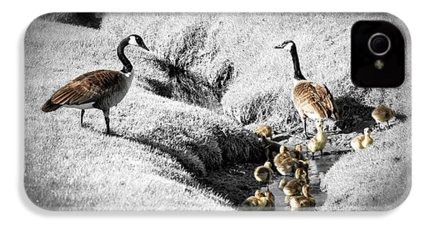 Canada Geese Family IPhone 4 / 4s Case by Elena Elisseeva