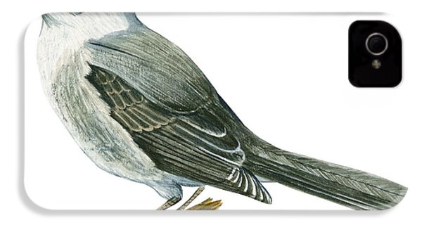 Canada Jay IPhone 4 / 4s Case by Anonymous