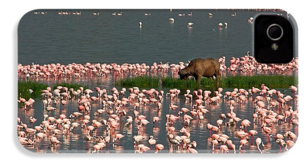 Cape Buffalo And Lesser Flamingos IPhone 4 Case by Panoramic Images