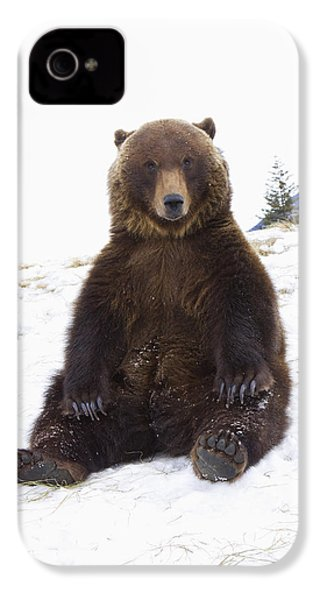 Captive Grizzly During Winter Sits IPhone 4 Case by Doug Lindstrand