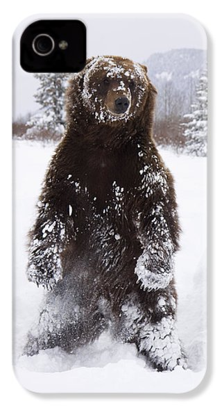Captive Grizzly Stands On Hind Feet IPhone 4 Case by Doug Lindstrand