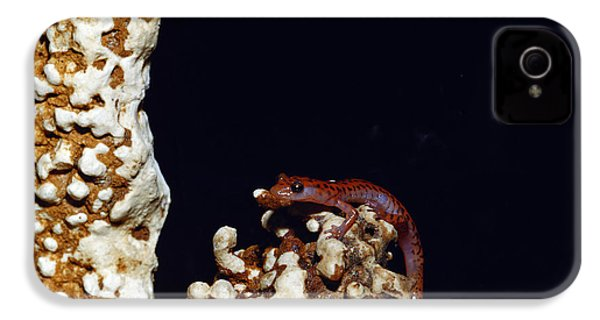 Cave Salamander IPhone 4 Case by Charles E. Mohr