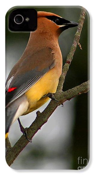 Cedar Wax Wing II IPhone 4 / 4s Case by Roger Becker