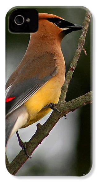 Cedar Wax Wing II IPhone 4 Case by Roger Becker