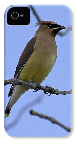 Cedar Waxwing 2 IPhone 4 Case by Eric Mace