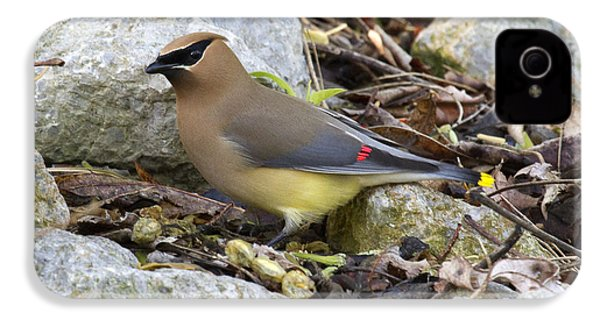 Cedar Waxwing IPhone 4 Case by Eric Mace