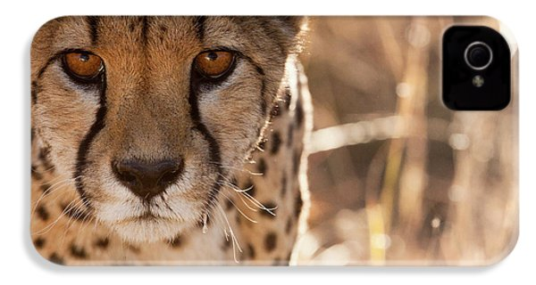 Cheetah Conservation Fund, Namibia IPhone 4 Case by Janet Muir