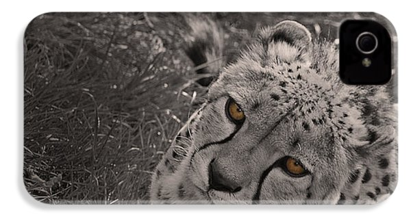 Cheetah Eyes IPhone 4 Case by Martin Newman